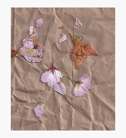 Dried Flowers - 1 Photographic Print