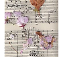 Dried Flowers & Schubert  Photographic Print