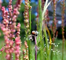 Ladybug in the Backyard Wildflowers by Morgana Horn