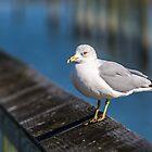 Seagull on Railing by GeneBerkenbile