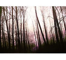 Enchanting forest... Photographic Print