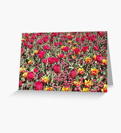 A Riot of Colour ! Greeting Card