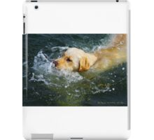 """Yellow Lab Swims MIchigan Lake"" iPad Case/Skin"