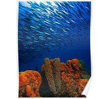 sea sponge and fish Poster
