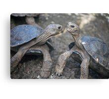 Galápagos Tortoises Canvas Print
