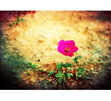 Earth Laughs in Flowers... Photographic Print