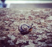 Snail on a Rail by Erin Darling