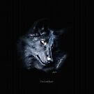 """The Look Back"" Timber Wolf Portrait by Skye Ryan-Evans"