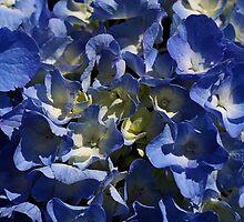 Blue Hydrangea  by Joy Watson