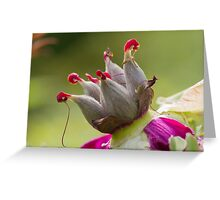 dried peony in the gardendried peony in the garden Greeting Card
