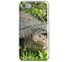 Soft Back Turtle  iPhone Case/Skin