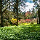 Spring Woodland by vivsworld