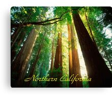Northern California,Humboldt County And Redwood Trees Canvas Print