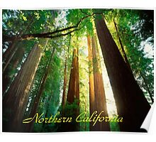 Northern California,Humboldt County And Redwood Trees Poster