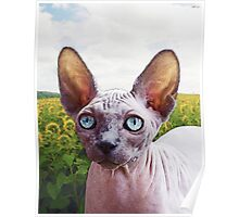 Cat In Sunflowers Poster