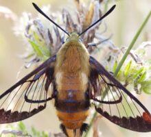 Hummingbird Clearwing Moth Sticker