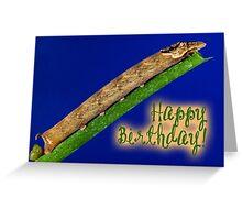 Happy Birthday - Caterpillar 02 Greeting Card