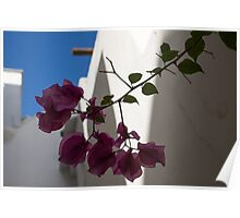 Contemplating Mediterranean Vacations - Whitewashed Walls and Bougainvilleas Poster