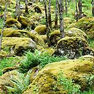 Moss and fern on the rocks by Arie Koene