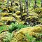 FERNS AND MOSSES AROUND THE WORLD