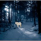White Pony in a Blue Wood by Wayne King