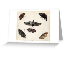 Insects and garden pansy, . Jan van Kessel the Elder Greeting Card