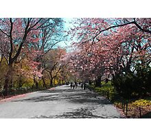 spring in central park Photographic Print