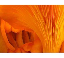 Orange Fungi Tunnel Of Love Photographic Print