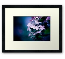 Passionate Hydrangea Framed Print