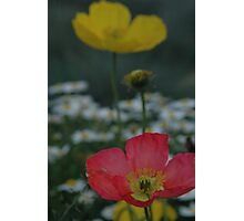 Yellow and pink floral Photographic Print