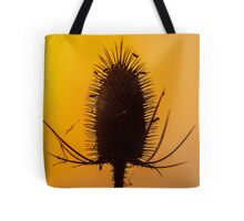 Beautiful back lit teasel  at sunset Tote Bag
