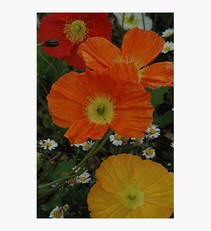 yellow and red floral Photographic Print