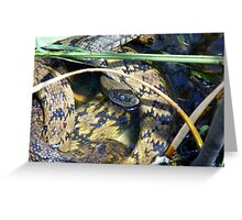 Two Blind Snakes Greeting Card
