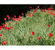 Poppy Time. Photographic Print