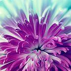 Purple flower by SIR13