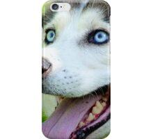 Micky Blue Eyes -Siberian Husky Dog - NZ iPhone Case/Skin