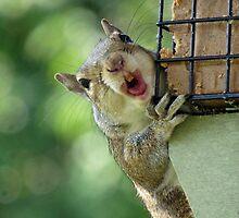 Squirrel! by Gretchen Dunham