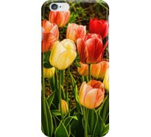 Impressions of Gardens - Particolored Vernal Tulips iPhone Case/Skin