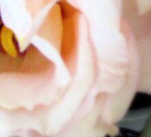Pretty in Peach Sticker