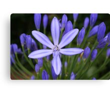 Blue star shining Canvas Print