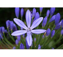 Blue star shining Photographic Print