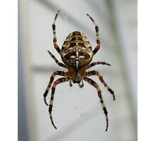 Cross Spider Photographic Print