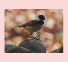 Carolina Chickadee On Rock Baby Tee