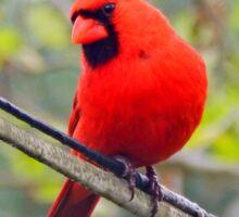 Bird on a Wire Sticker