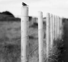 The Wexford Bird Sticker