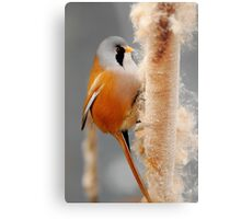 On The Winter Forage Metal Print