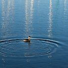 Ripples and Circles – Red-Necked Grebe by Georgia Mizuleva