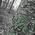 Forest Segment by Veronica Schultz