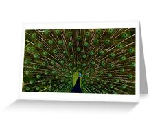 Peacock showing off his beautiful feathers Greeting Card