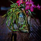 Wildwood Flower by Steve Baird